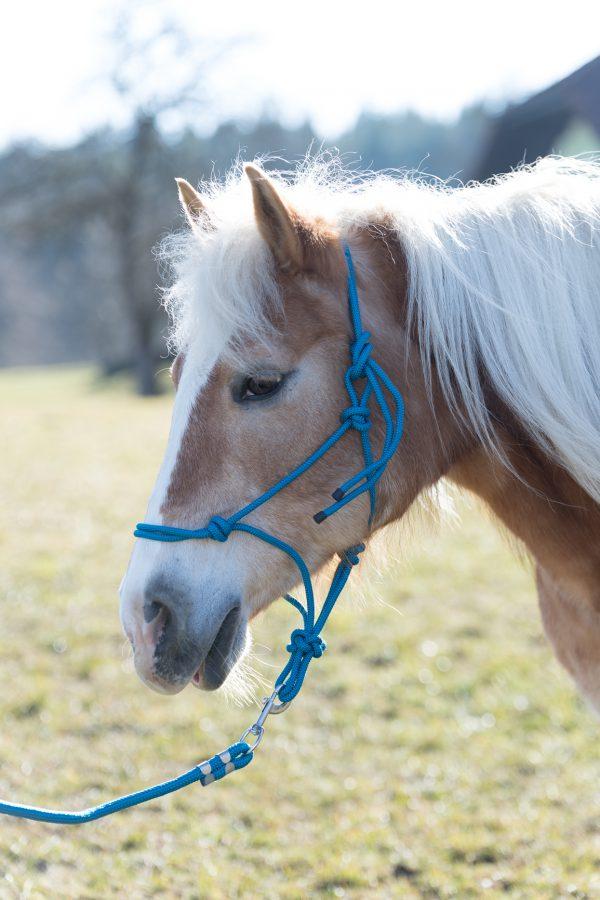 BergReiter Stallhalfter Eco Shetty Pony Cob Full XFull Türkis Pink Rot Grün Navy